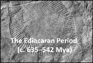 The Ediacaran Period